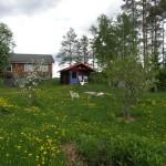 Hunajantuotantokeskus